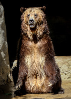 A Stand Up Bear