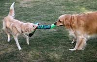 A Game of Tug