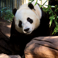 Yun Zi all grown up